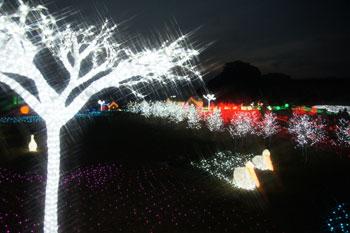 20101125_2.jpg