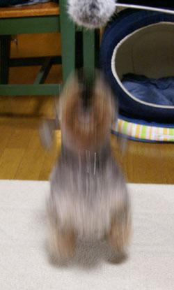 20090614_5.jpg
